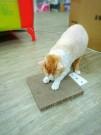 ☆國際貓家,超優惠抓板組合☆貓家BOXCAT超耐磨抓板8片組(送限量版貓屋)