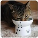 ★國際貓家★貓壹-快樂食光(高腳食碗)